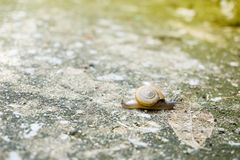 Selective focus at the small snail with blur backgroundImage I. The small snail Royalty Free Stock Image