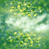 Selective focus on spring leaves - beautiful spring Royalty Free Stock Images