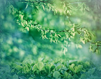 Selective focus on spring leaves Stock Photo