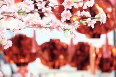 In selective focus sweet pink cheery blossom with blurred Chinese lanterns hanging on the wall stock photography