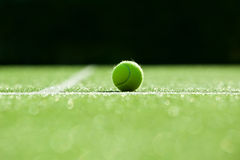 Selective focus. tennis ball on tennis grass court good for back Stock Photography
