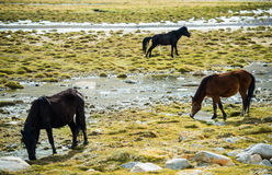 Selective Focus Three Horse on Field Royalty Free Stock Photography