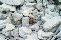 Selective focus on a toad hiding in the pile of crushed cement bricks stock images