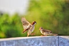 Selective Focus of Two Birds on Concrete Beam royalty free stock photos