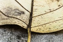 Selective focus on venation of yellow leaf macro close up, abstract creative background. France Royalty Free Stock Photo