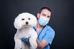Selective focus of veterinary posing with white dog Royalty Free Stock Photography