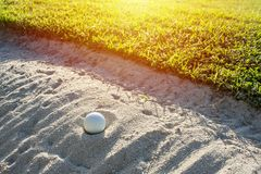 Selective focus of white golf ball on the green field and sand b. Unker with sunlight stock photography