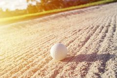 Selective focus white golf ball on the sand bunker with green field royalty free stock photos