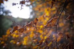 Selective Focus of Withered Leaves of Tree Stock Photos