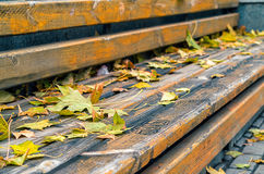 Selective focus wooden bench with autumn leaves. Selective focus autumn leves on wooden bench in fall park Royalty Free Stock Photography