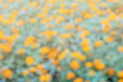 Selective focus Yellow flower background.Blurred yellow flower meadow. stock image