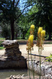 Selective focus on the yellow plants in the foreground Royalty Free Stock Image