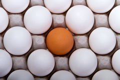 Selective golden egg Stock Images