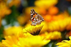 Selective Photo Butterfly on Yellow Petaled Flower during Daytime Stock Photo