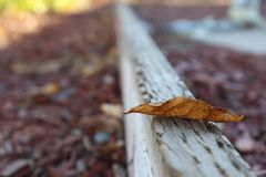 Selective Photo of Dried Leaf Royalty Free Stock Image