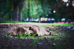 Selective Photo of Dry Leaf on Ground Royalty Free Stock Photography