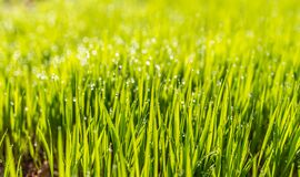Selective Photo of Green Grass Royalty Free Stock Images
