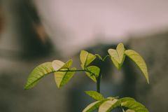 Selective Photo Of Green Leafed Plant stock images