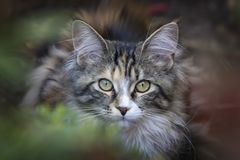 Selective Photo of White and Black Tabby Kitten Stock Images