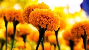 Selective Photo of Yellow Petaled Flowers stock image