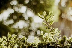 Selective Photograph of Green Plants at Daytime Royalty Free Stock Images