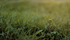 Selective Photography of Green Grass and Flower Stock Images