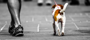 Selective Photography Of Person Walking A Dog Royalty Free Stock Image