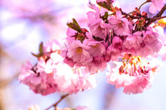 Selective Photography of Pink Petaled Flower Stock Images