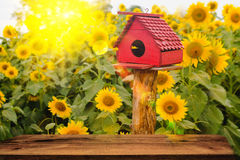 Selective and Soft focus. Bird Houses on Sunflowers field background with lighting flare effect Stock Images
