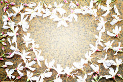 Selective soft focus of heart shaped pink flowers on vintage rusty wall background Stock Photos