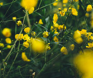 Selective Up Photograph of Yellow Petaled Flower Royalty Free Stock Photo