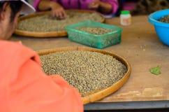 Selecttion зеленого кофе Стоковая Фотография