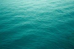 Seledyn pluskocze w atlantyckim oceanie fotografia stock