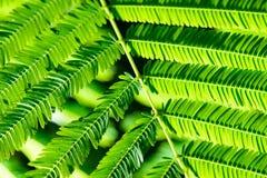 Selekcyjna ostrość mały zielony liść z kropelką Zdjęcia Royalty Free