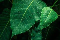 Selekcyjna ostrość mały zielony liść z kropelką Obrazy Stock