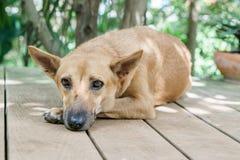 selekcyjna ostrość na oczach osamotniony bezdomny uliczny brązu pies Obrazy Royalty Free