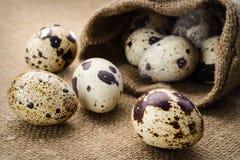 Selekcyjnej ostrości wizerunek przepiórki jajka Fotografia Stock