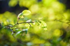 Selektiv fokus av det gröna bladet Arkivbilder