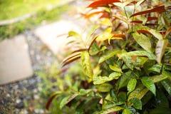 Selektiv fokus av det gröna bladet med lilla droppen Arkivbilder