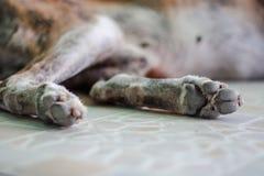 Selektiv fokus av gammal dog& x27; s tafsar Royaltyfri Foto