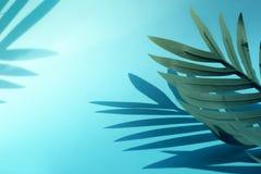 Selektiv fokus av kokosnöten och palmbladet med skugga på färgrikt Bakgrund Semestra begrepp, tropiskt och sommar arkivbild