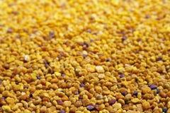 Selektiv fokus för Pollenkorn Arkivbild