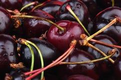 Selektiv fokus nya Cherry Arkivfoton