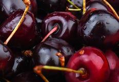 Selektiv fokus nya Cherry Fotografering för Bildbyråer