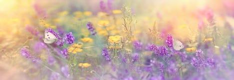 Selektiv fokus på fjäril på lavendel i äng arkivfoto