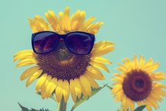 Selektiver Fokus auf schwarzer Sonnenbrille, Sonnenblume und Sonnenbrille an Lizenzfreie Stockfotografie