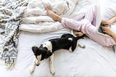 selektiver Fokus des netten Schwarzweiss-Welpen, der auf Bett nahe Frau liegt lizenzfreie stockbilder
