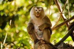 Selektiver Fokus mit der Schärfentiefe Affen untersuchend die Kamera Thailand Stockbilder