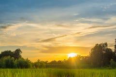 Selektiver Fokus Reisfeld in Thailand, in den Wiesen und im Himmel lizenzfreie stockfotografie