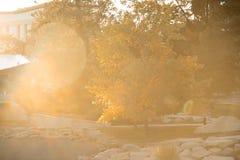 Selektiver Fokus-weicher Hintergrund von Sun-Aufflackern und Autumn Trees Stockfoto